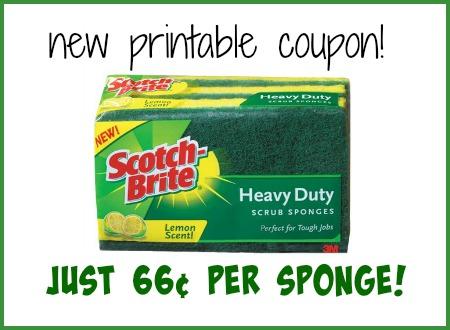 scotch brite sponge publix
